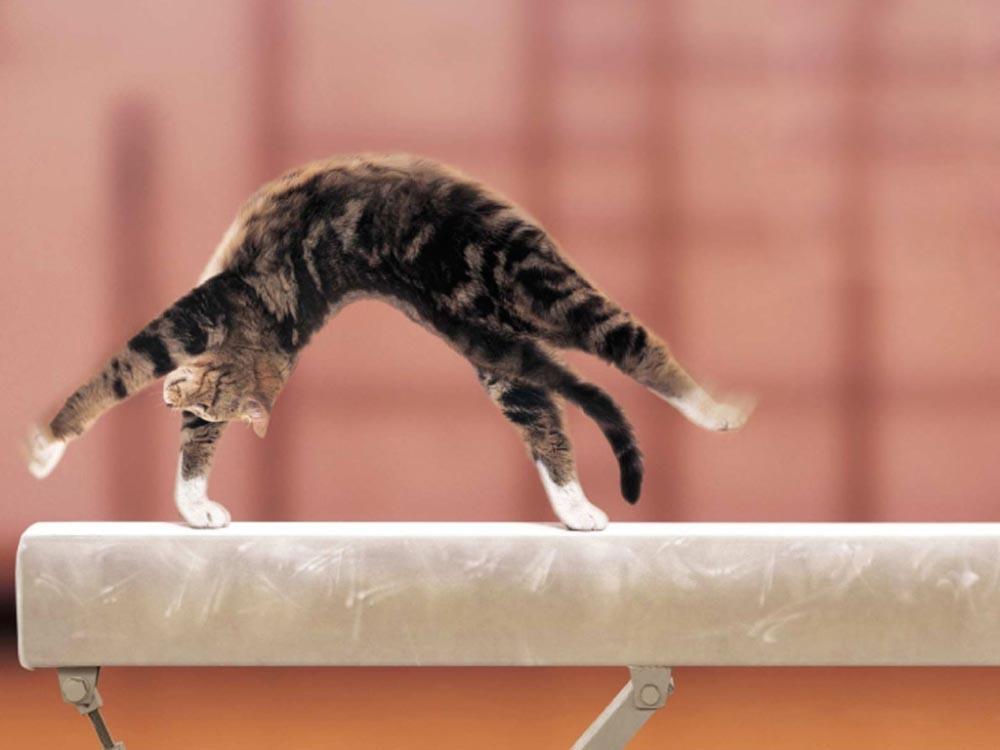 Как заставить кошку похудеть