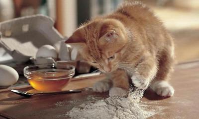 ОВД, или новая технология производства корма для кошек