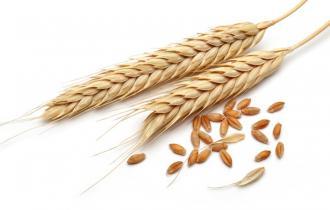 Цельная пшеница