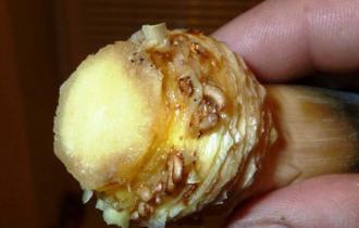Стебель ананаса