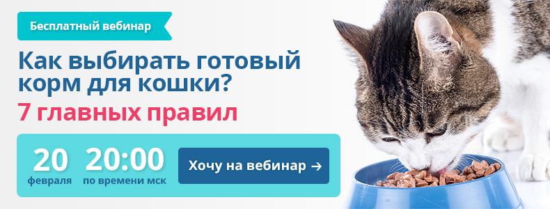 Бесплатный вебинар: как выбирать готовый корм для кошки