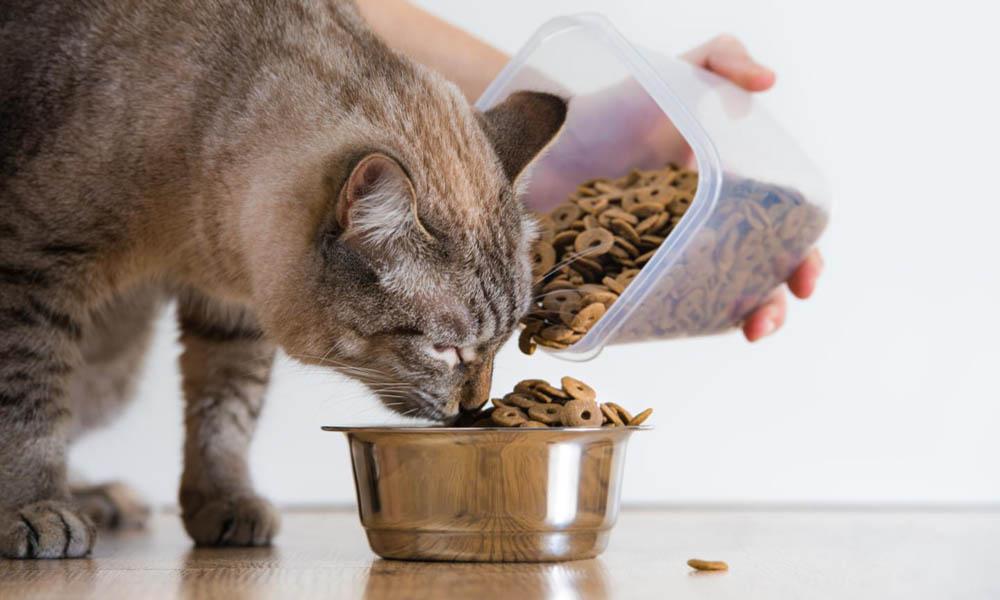 Чем кормить можно кота?