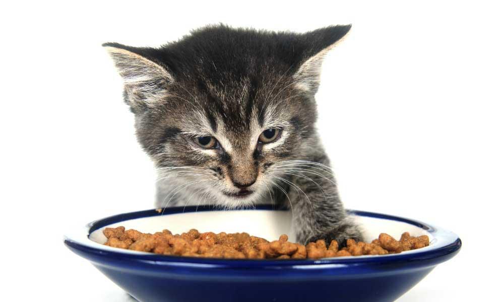 Сухие корма для кошек плюсы и минусы thumbnail