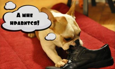 Вы знаете, из чего делают корм для собак?