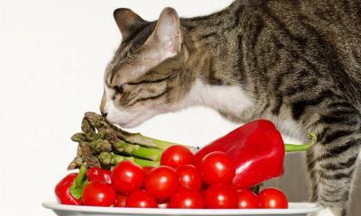 Встречаются ли кошки и собаки-вегетарианцы?