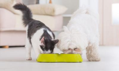 Собака ест кошачий корм: это не вредно?