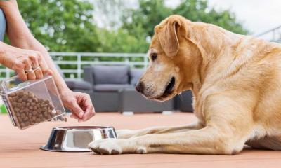 Суточная норма сухого корма и консервов для собак