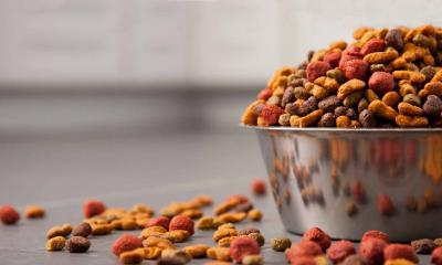 Сырьё кормов для животных – зрелище не для слабых