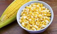 Кукуруза в составе корма для собак и кошек