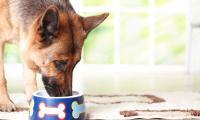 Сколько белка можно собаке?
