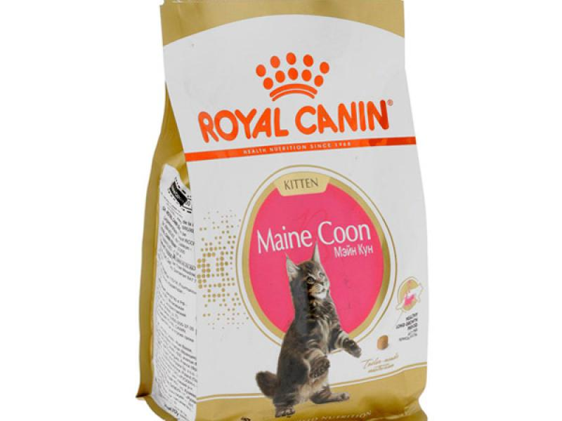 cool latest royal canin maine coon kitten royal canin maine coon kitten with royal canin maine coon with royal canin maine coon with royal canin maine coon